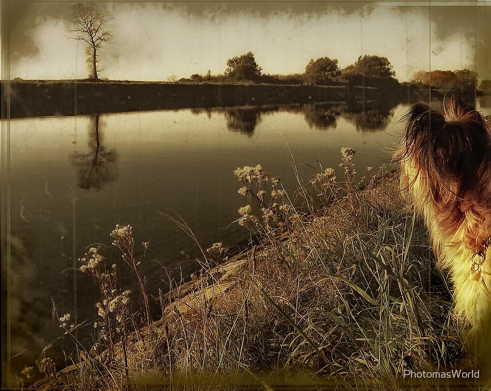 My life as a dog ... by PhotomasWorld