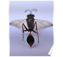 Wasp Stinger - rear view Poster