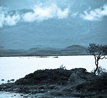 Rannoch Tree by wildscape