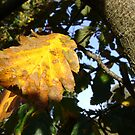 Autumn - yellow leaf close-up, Burntisland by armadillozenith