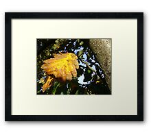 Autumn - yellow leaf close-up, Burntisland Framed Print
