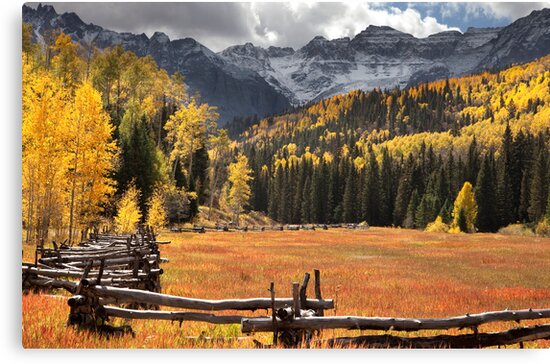 Colorful Meadow by Janet Fikar
