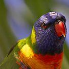 Rainbow Lorikeet by Bill  Robinson