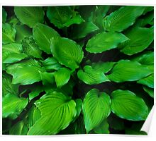Green Foliage Poster