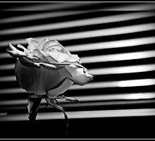 """""""Blinded"""" by Beauty by Sheree Zielke"""