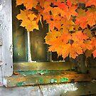 """"""" Window Fall """" by canonman99"""