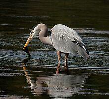 FISHING by Sandy Stewart