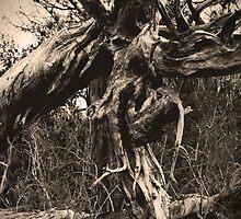 Spooky Hallow by Cheri Bouvier-Johnson