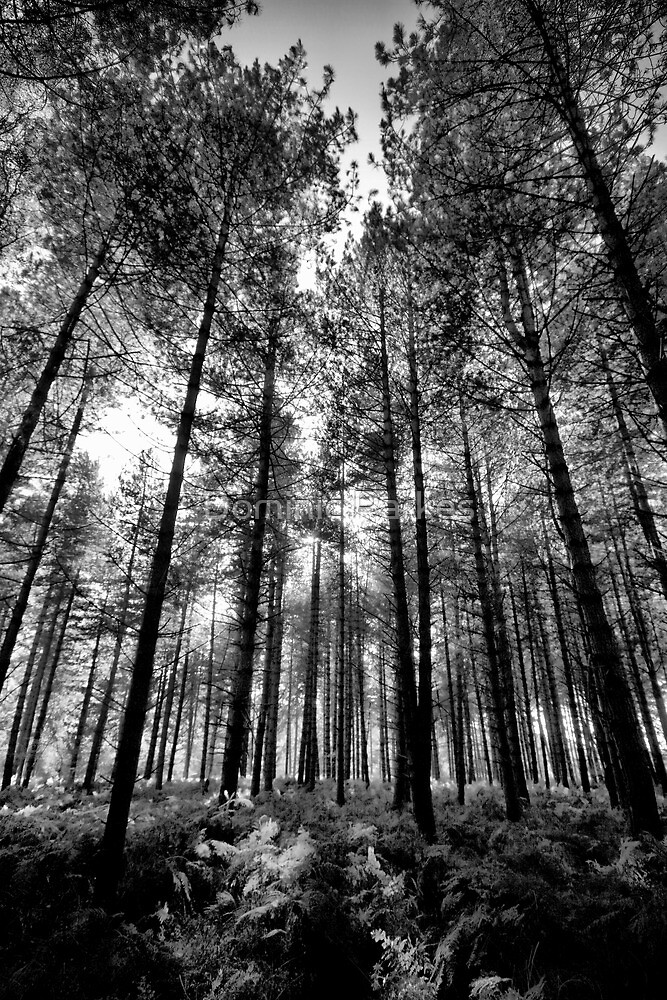 Trees by Dominic Parkes