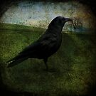 Crow by Voila and Black Ribbon