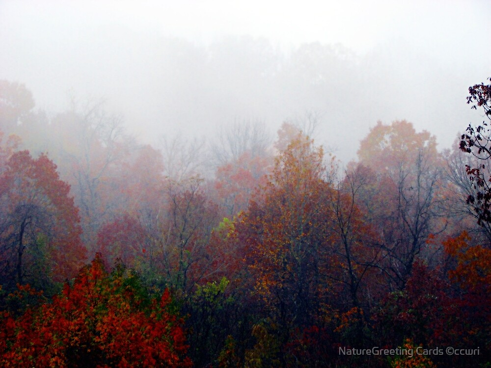 All The Leaves Are Brown, And The Skies Are Gray by NatureGreeting Cards ©ccwri