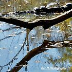 Reflections by Rex  Montalban