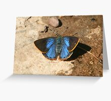 Arizona Hairstreak, dorsal view Greeting Card