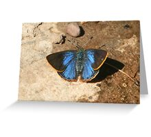Arizona Hairstreak, dorsal view Greeting Card