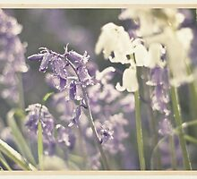 Vintage Bluebells by Evelyn Flint - Daydreaming Images