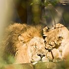 Father and Child.... in the animal Kingdom of London Zoo by Jonathan Doherty