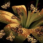 Lily and Butterflies by Vitta