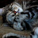 Sleepyhead by Adrienne Berner