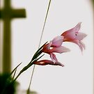 Cross , Flower by Jan  Postel