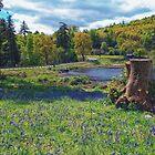 Cragside Bluebells by Chris Vincent