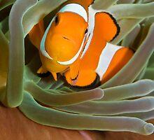 Little Nemo by muzy
