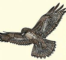 Red Tailed Hawk in flight by JackassKershaw