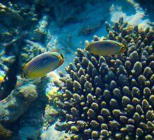 Maldivian coral reef by Brünø Beach .