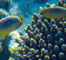 Maldivian coral reef Sticker