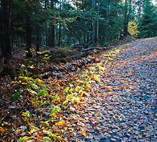 Hamilton Point Carriageway Trail by Jay Morena