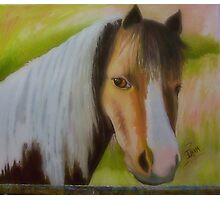 A Pretty Horse From France Photographic Print