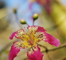 wild orchid tree by mariapar