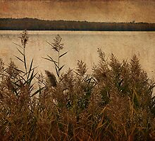 Lake Grass by janetlee