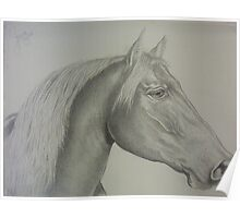 Horse drawing in canvas-like paper Poster