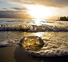 morning jelly by gibbut