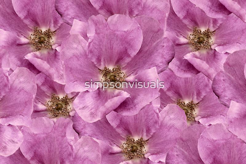 Goldrush - Rambling Rose by simpsonvisuals