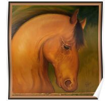 A strong horse head portrait Poster