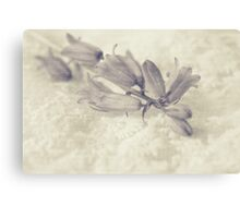 Monochrome Bluebell Canvas Print