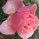 Reversible Rose by MarianBendeth