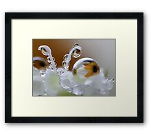 Daisy bubbles Framed Print