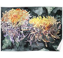 chrysanthemum flower watercolour painting Poster