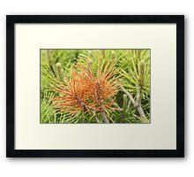 Brown Needles Against Green Framed Print