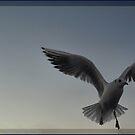 In flight by Britta Döll