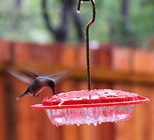 Sweet Nectar in the Rain by LauraBroussard
