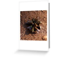 A Bouquet of Flies  Greeting Card