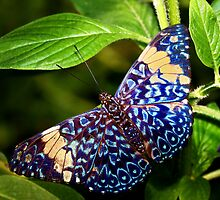 Red Cracker Butterfly - Tucson Botanical Gardens by John Absher