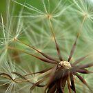 Dandelion Zenith by myREVolution