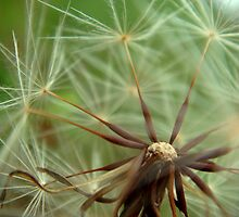 Dandelion Zenith by myREVolution