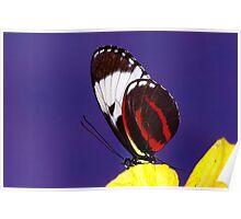 Butterfly - Tucson Botanical Gardens Poster