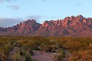 Organ Mountains At Sunset by Larry3