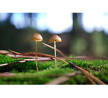 LBM's - Little Brown Mushrooms Photographic Print